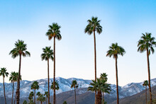Snow And Palms - Snow Dusts The San Jacinto Mountains In Contrast To The Palm Trees Outside Palm Springs, California.
