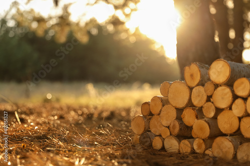 Foto Stack of cut firewood in forest on sunny day