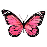 Fototapeta Motyle - beautiful pink butterflies, pink pattern
