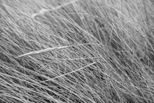 Graminées Des Dunes En Noir Et Blanc