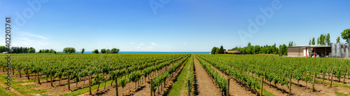 Fotografie, Obraz Vineyard on tha lake shore of Niagara on the lake