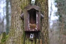 Baumläufernistkasten Geöffnet