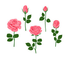 Pink Roses Of Different Shapes Set. Vector Illustration Of Blooming Flowers And Buds With Stems And Green Leaves In Cartoon Flat Style.