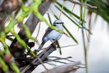 Nest With Baby Chicks Masked Washerwoman Or Bride Itanhaem- SP BRASIL - DEZEMBRO 26, 2020