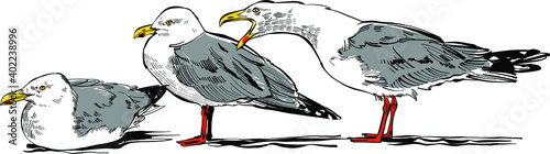 Foto hand drawn vector illustration of a seagull
