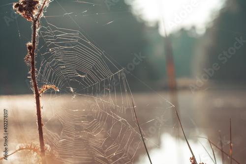 Leinwand Poster Spinnennetz