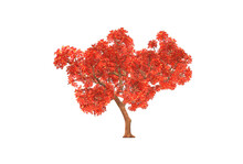 3d Illustrations Trees, Japanese Maple With White Background
