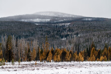 Damage From The East Troublesome Fire - Rocky Mountain National Park