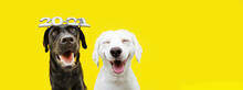 Banner Two Happy Dogs Celebrating New Year 2021 With Text Glasses. Isolated On Yellow Background.