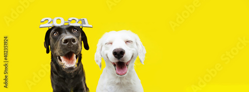 Fototapeta Banner two happy dogs celebrating new year 2021 with text glasses. Isolated on yellow background. obraz