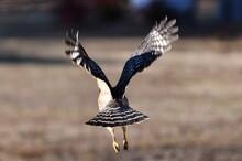 Hawk Lift Off