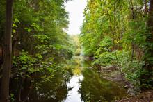 Río En La Mitad De Un Bosque