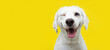 Happy dog puppy winking an eye and smiling  on colored yellow backgorund with closed eyes.