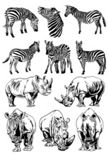 Vector Set Of Rhinos And  Zebras Isolated On White,illustration