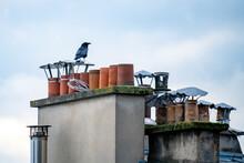 Tejados De París Con Vistas A La Torre Eifield De Fondo Durante El Atardecer