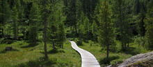 A Hiking Trail Leading On A Wooden Footbridge Through A Marsh Area Near Hotel Paradiso Del Cevedale In The Martell Valley In South Tyrol, Italy