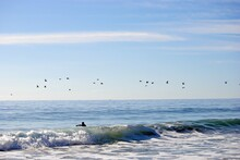 Human Swimming On The Sea With Birds Flying Over The Waves