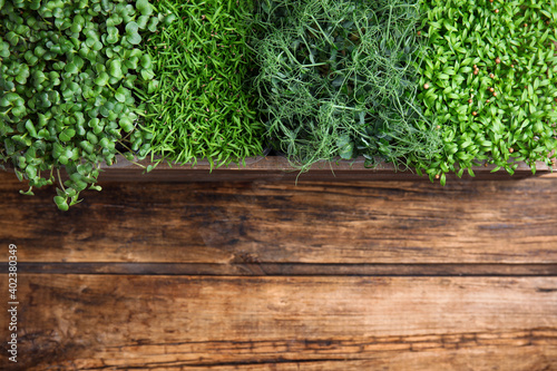 Fototapeta Fresh organic microgreens on wooden table, top view. Space for text obraz