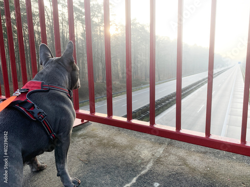 Ein Hund steht auf einer Autobahnbrücke und betrachtet die leeren Fahrbahnen Fototapet