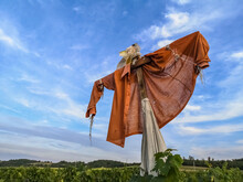 Scarecrow On A Vineyard With Blue Sky In The Nature