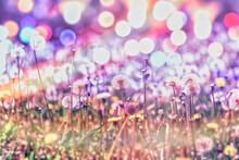Dendelion Blow Ball, Dandelion Seeds And Dandelion Flower In Meadow