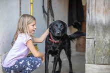 Young Girl Playing With Dog