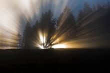 Sonnenstrahlen Im Nebel Durch Bäume Scheinend