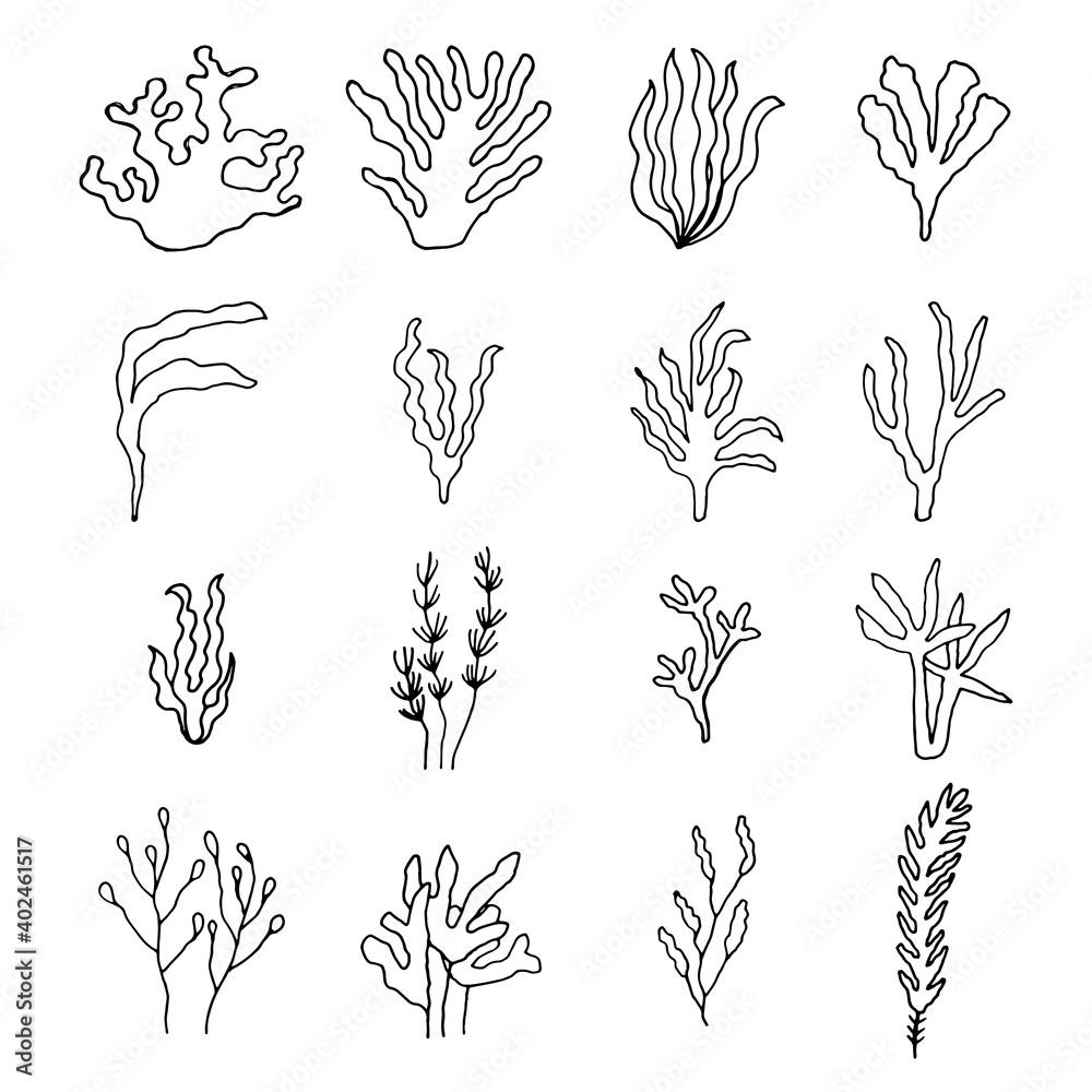 Fototapeta algae green marine drawing set of vector linear icons