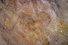 Abstract Wooden Background Of Sawn Wood