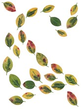 Arrangement Of Various Multicolor Leaves Isolated Close Up