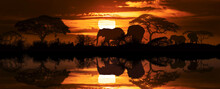 Sunset With Silhouettes Of Elephants And Acacia Trees Reflected In The Water