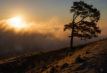 Beautiful View Of The Lone Scots Pine And The Winter Morning Sun Glowing Across The Mist Filled Pewsey Vale, Seen From Martinsell Hill, Wiltshire