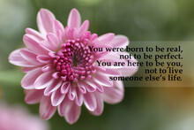 Inspirational Quote - You Were Born To Be Real, Not To Be Perfect. You Are Here To Be You, Not To Live Someone Else's Life. On Floral Background Of Pink Gerber Daisy Flower.