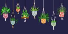 Scandinavian Macrame Plant. Boho Home Interior Decor. Isolated On Dark Background. Vector Hand Drawn Illustration.