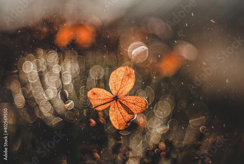 Jesienna impresja- Hortensja