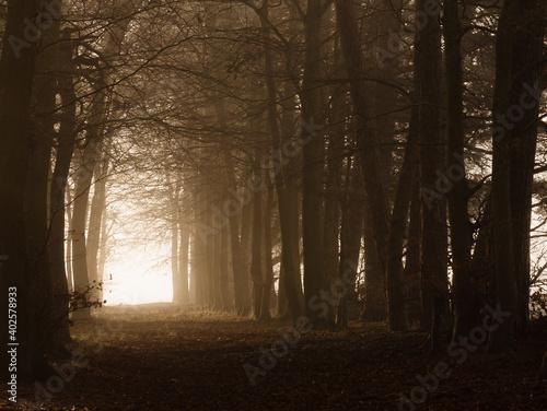 Fotografia, Obraz light mist lit by early morning winter sun in a tree lined boulevard tunnel