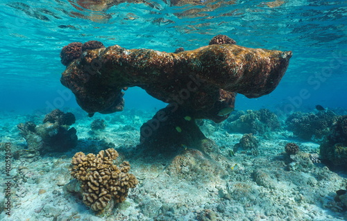 Fototapeta Old reef formation underwater in the lagoon of Rangiroa, Pacific ocean, Tuamotus