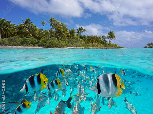 Fotografie, Obraz Tropical seascape over and under water, island coastline and group of fish under