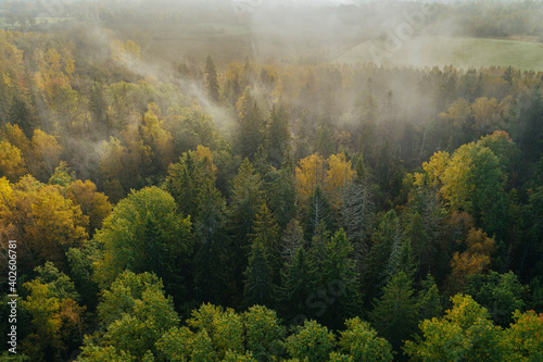 Fotografering Birds eye view of thick forest during autumn sunrise with fog.