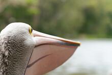 Close Up Of A Pelican Pelican View