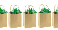 Several Cacti In A Row Or Succulent In An Eco Paper Bag Isolated On White. Environment Friendly Mock Up. Florist Sale Delivery Service Or Shopping. Greenery Mockup Bags