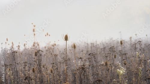 Obraz na plátně champs dans le brouillard