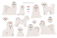 Maltese Dogs In Different Poses. Adult And Great Dane Puppy Set