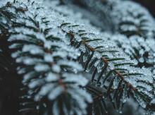 Frostiger Tannenzweig