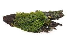 Green Moss On Tree Bark Isolated On White Background