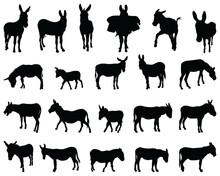 Black Silhouettes Of Donkeys On White Background