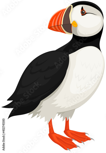 Fotografie, Obraz Vector illustration of a standing Atlantic Puffin bird against a white background