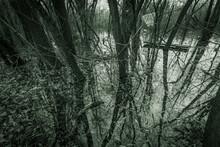 Eery Dark Winter Forest In Water