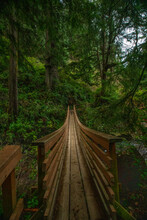 Wooden Foot Bridge Over Stream In Oregon Wooded Coastal Forest