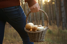 Man Holding Basket With Porcini Mushrooms In Forest, Closeup